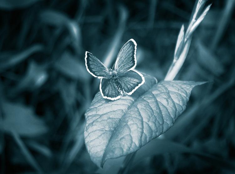 Эффект бабочки