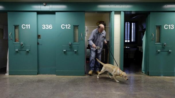 Заключенные США обучают собак для ветеранов с инвалидностью