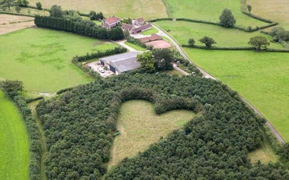 Дубовый лес в память о любимой