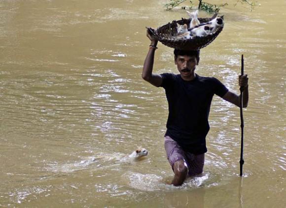 Житель деревни спасает котят в корзине во время наводнения на окраине города Каттак. Мама следует за детенышами.