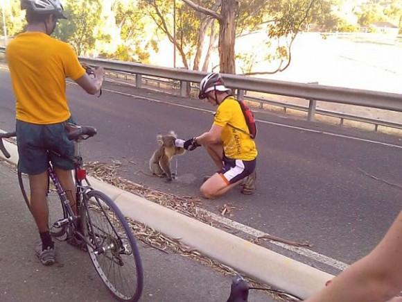 В тот день в Австралии было 40 градусов.