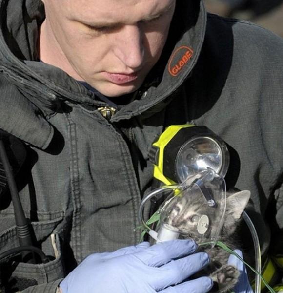 Пожарный обеспечивает кислородом спасенного из горящего дома котенка.