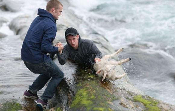 Норвежцы рисковали жизнью, чтобы спасти упавшего в воду ягненка.