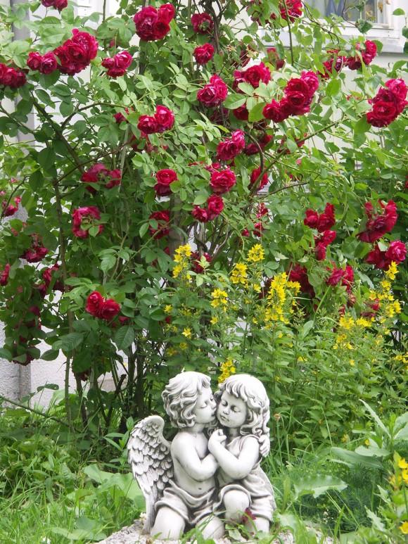 Любовь под розами