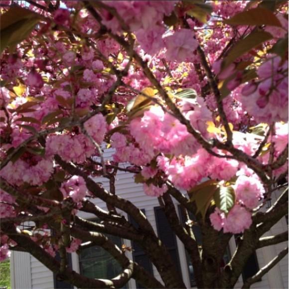 Вот он — запах весны!