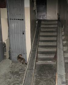 Отец Фрола оборудовал для сына пандус в подъезде