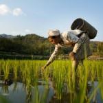 В Индии набирает популярность акция Rice Bucket Challenge
