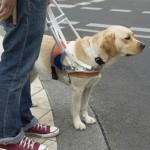 Компенсация на содержание собак-поводырей будет увеличена