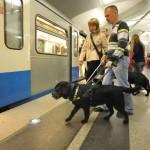 Собаки-поводыри помогут маломобильным москвичам ориентироваться в метро