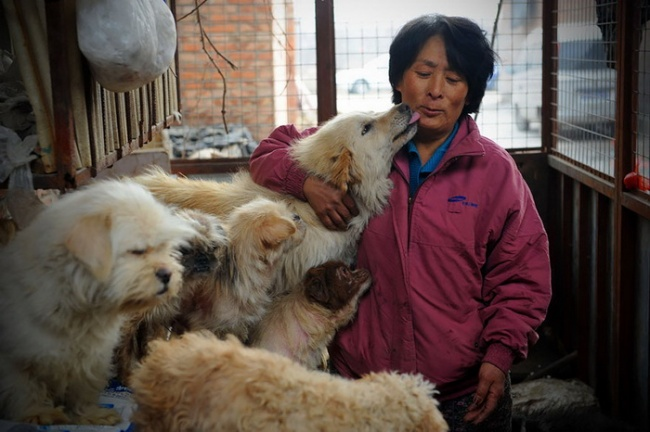 17915310-R3L8T8D-650-yulin-dog-meat-festival-1