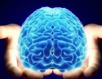 Ученые впервые смогли вырастить в лаборатории человеческий мозг