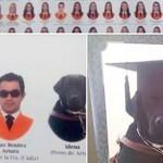 Лабрадор «окончил» испанский университет вместе с хозяином
