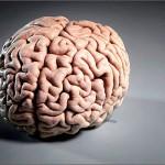 Ученые впервые вырастили в пробирке взрослый мозг человека
