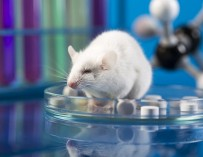 Ученые впервые применили стволовые клетки для починки спинного мозга