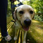 Собачья судьба. Истории тех, кто стал глазами незрячих