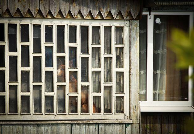 После нападения Сергей запер питбуля в доме. На фото другая собака Сергея, которую он временно запер на веранде. Фото: Александр КОРОБ