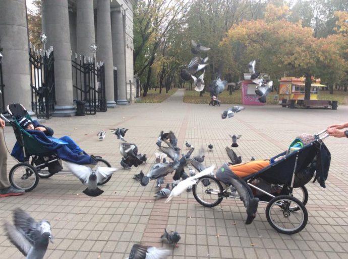 9-park-gorkogo-kormim-ptits