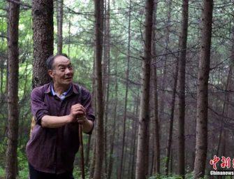 Китайский инвалид в течение 32 лет занимался посадкой деревьев